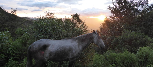 A Love Affair with Horses-3: Drunk Aussies in Vilcabamba